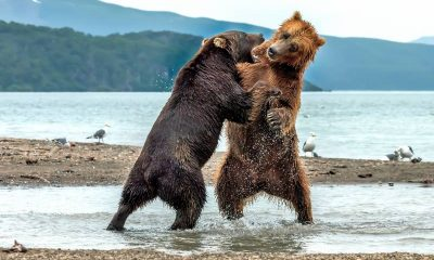bear attack best safety measures while camping
