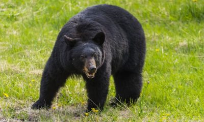 how to keep bears away from campsite